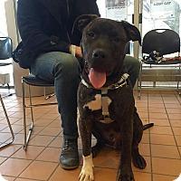 Adopt A Pet :: Sully - Villa Park, IL