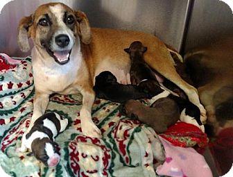 Care Dog Adoption Seneca Sc