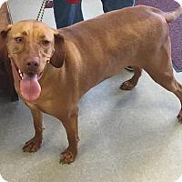 Adopt A Pet :: SABLE - Clayton, NJ