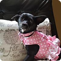 Adopt A Pet :: Elle - Salt Lake City, UT