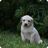Adopt A Pet :: Chaz - Groton, MA