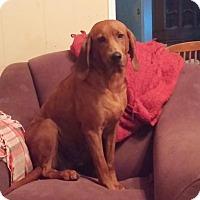 Adopt A Pet :: Lucy - Ball Ground, GA