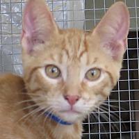 Adopt A Pet :: Pelham - Gonzales, TX