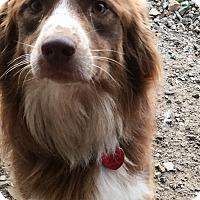 Adopt A Pet :: Ciggey - Parker, KS