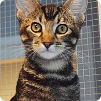 Adopt A Pet :: Ripley - Lincoln, NE