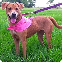 Adopt A Pet :: Saddles - N - Huntington, NY