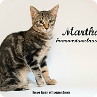 Domestic Shorthair Kitten for adoption in Modesto, California - Martha