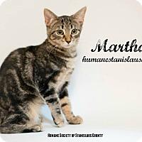 Adopt A Pet :: Martha - Modesto, CA