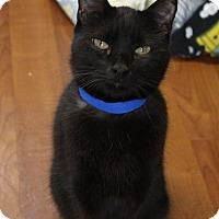 Adopt A Pet :: Smokie - Joplin, MO