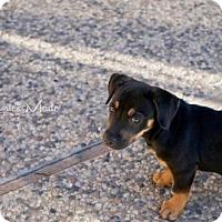 Adopt A Pet :: Aggie - San Jose, CA
