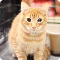 Adopt A Pet :: Bobby - Sacramento, CA