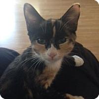 Adopt A Pet :: Kenzi - Glendale, AZ