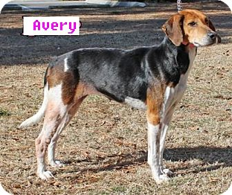 Foxhound Mix Dog for adoption in Burgaw, North Carolina - Avery