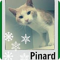 Adopt A Pet :: Pinard-Watch my Holiday video! - Manchester, NH