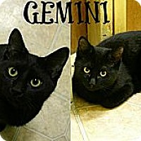 Adopt A Pet :: Gemini - Mobile, AL