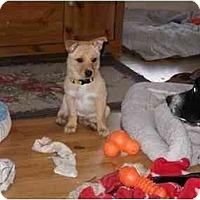 Adopt A Pet :: Marley - Braintree, MA