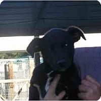 Adopt A Pet :: Mandy - Alexandria, VA