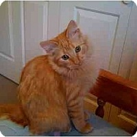 Adopt A Pet :: Squash - Mesa, AZ