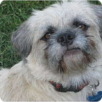 Adopt A Pet :: Snuggles - Culver City, CA