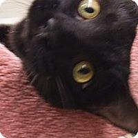 Adopt A Pet :: Diablo - Bear, DE
