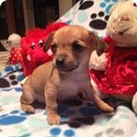 Adopt A Pet :: Baby Liam - Marlton, NJ