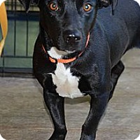 Adopt A Pet :: Lobo - Clinton, LA
