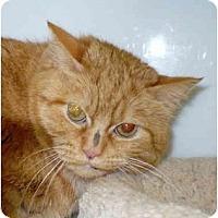 Adopt A Pet :: Juni - Colmar, PA