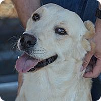 Adopt A Pet :: Logan - Perris, CA