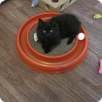 Adopt A Pet :: Cinders - Kirkwood, DE