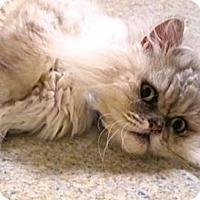 Adopt A Pet :: Jean Claude van Damme - Davis, CA
