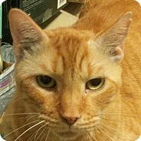 Adopt A Pet :: Morris - Ft. Lauderdale, FL