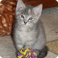 Adopt A Pet :: Misty - Xenia, OH