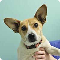 Adopt A Pet :: Shortcake - Smyrna, GA