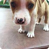 Adopt A Pet :: Donkey - Marlton, NJ