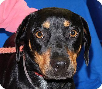 Mosha   Adopted Dog   ...