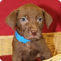 Adopt A Pet :: Baxley - Waldorf, MD