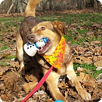 Adopt A Pet :: Lucille - Capon Bridge, WV