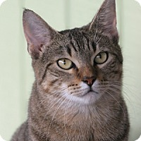 Adopt A Pet :: Molly - North Fort Myers, FL