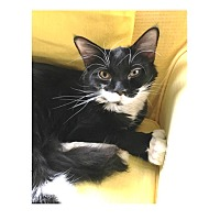 Adopt A Pet :: Rhonda - Ortonville, MI