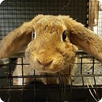 Adopt A Pet :: Donovan - Conshohocken, PA