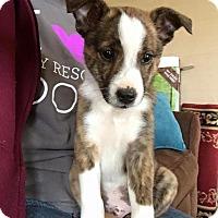 Adopt A Pet :: Hicks - Broken Arrow, OK