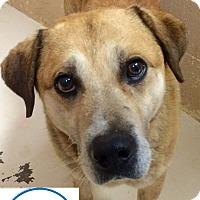 Adopt A Pet :: Sonner - Loudon, TN
