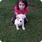 Adopt A Pet :: Sam (ETAA)