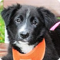 Adopt A Pet :: Lina - San Francisco, CA