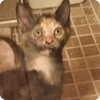 Adopt A Pet :: Monkey,Daisy and Onyx - Lincolnton, NC