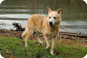 Labrador Retriever Mix Dog for adoption in Norfolk, Virginia - SENORITA KIA