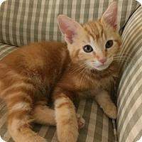 Adopt A Pet :: James-13361 - Richardson, TX
