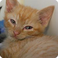 Adopt A Pet :: Jon - Staunton, VA