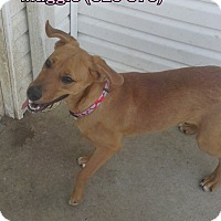 Adopt A Pet :: Maggie - Tiffin, OH