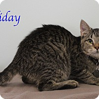 Adopt A Pet :: Holiday - Bradenton, FL